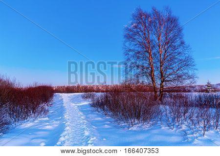 Winter Landscape At Dusk In The High Vens