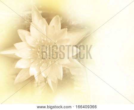 Blurred beautiful lotus flower soft color for background