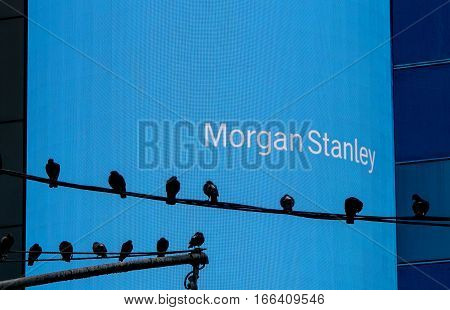 New York, August 2, 2016: A number of pigeons are sitting on two wires in front of a big Morgan Stanley electronic screen near Times Square.