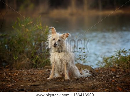 White Terrier mix with head cocked sitting by the lake