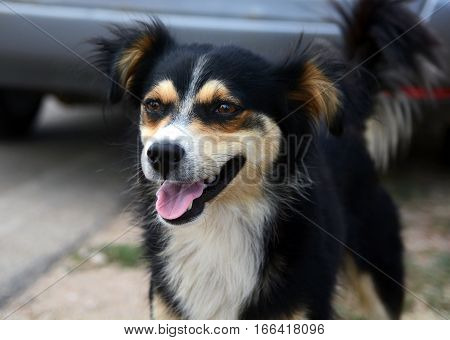 Cute funny  dog on the street smiling