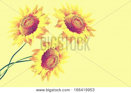 Bright colorful sunflowers on a background of the summer landscape.