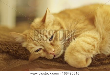 Closeup of sleeping cat lying on plush fabric