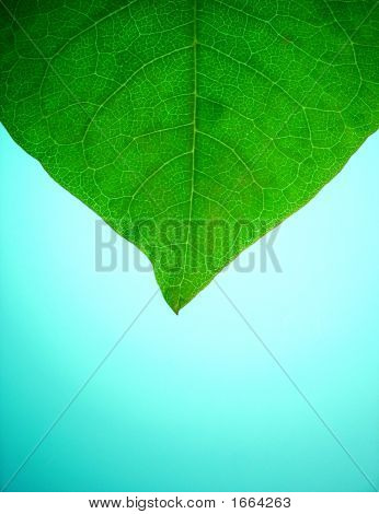 Leaf_On_Blue