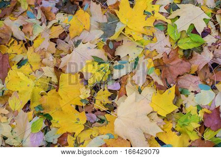 Autumn leaves of different shades of warm