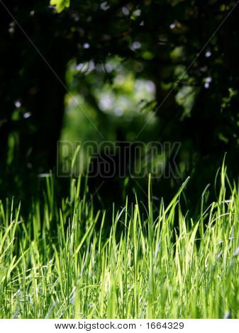 Rabbit Background