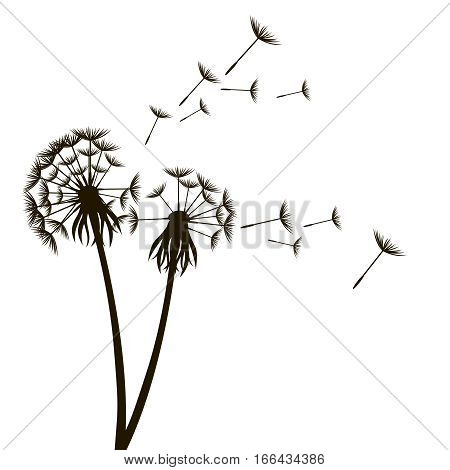 Dandelion Fluffy Flower and Seeds Silhouette Meadow Plant Element Modern Eco Style. Vector illustration