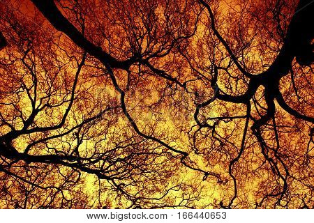 The forest in flames, trees on fire, pyroterrorism, environmental catastrophe