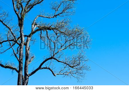 The Tree Is Fall The Leaf On Blue Sky Background
