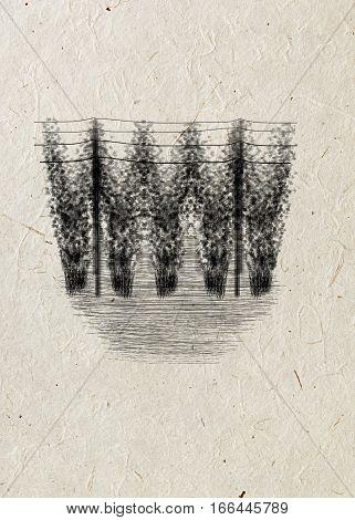 Freehand drawing espalier hop-garden black ink on beige rice paper background. Beer card.