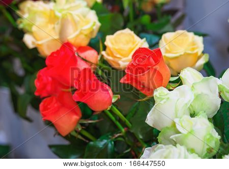 Beautiful roses for sale at a florist's shop.