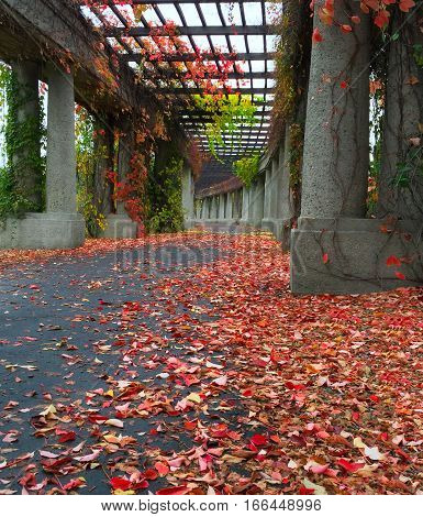 Archway passage in the garden with autumn leafs on the ground in Wroclaw Poland
