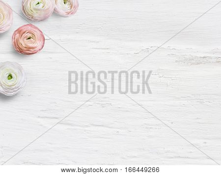 Feminine desktop mockup with buttercup flowers, Ranunculus, empty space and shabby white background. Top view, picture for blog or social media.