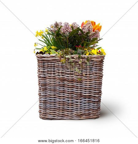 fresh flowers in wicker basket isolated on white background