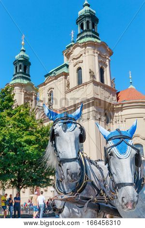 Prague the capital of the Europe state of the Czech Republic. Old Town Square and two horses on a background of Church of St. Nicholas