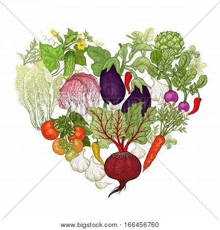 Delicious heart made of vegetables. Vector illustration art set. Beetroot carrots tomatoes cucumbers radishes lettuce garlic eggplant artichoke on white background. Vintage hand drawing plants