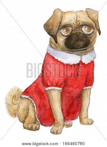 a Pug portrait, mops girl, cutie pug-dog in a cute red dress