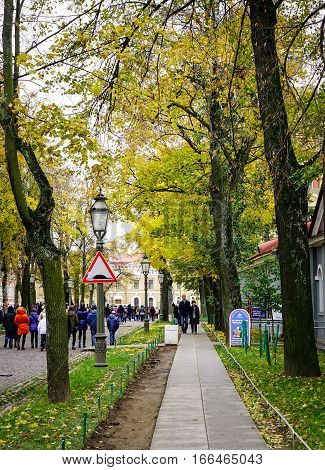 People Walking On Street With Many Trees