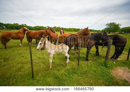Brown horses and white foal at a fence.