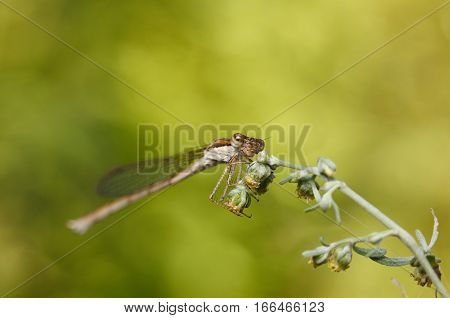 Dragonfly On Weed Grass