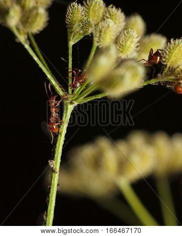 Ants Teamwork