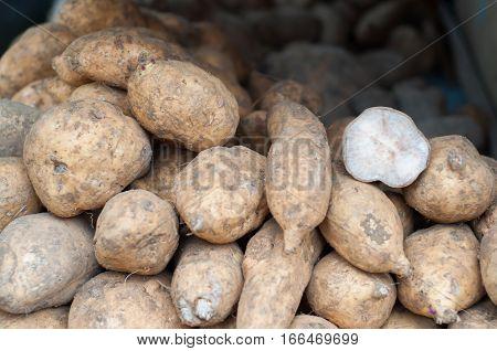 purple tuber crops. bulbs have a sense such a deep purple sweet. raw food