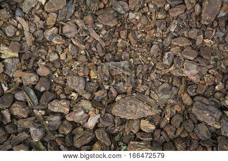 Fallen pieces of pine bark brown background