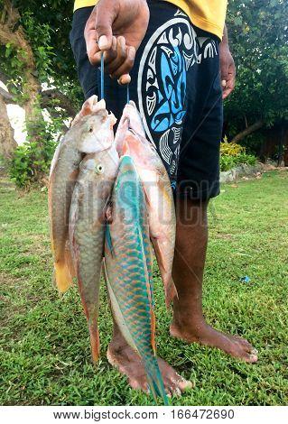 Fijian Fisheman Carry His Early Morning Fish Catch