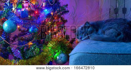 Christmas mood, the cat is sleeping beside the Christmas tree.