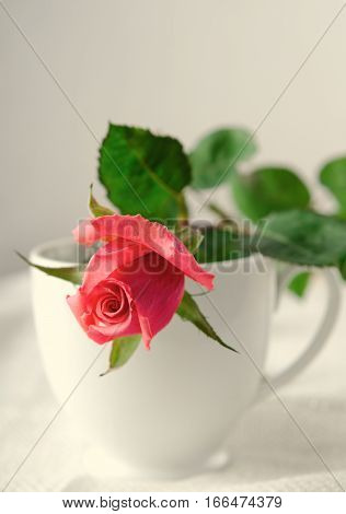 Pink Roses, Flowers on White Background in cup, card for Valentines day, copy space, Pastel Color, toned, vertical