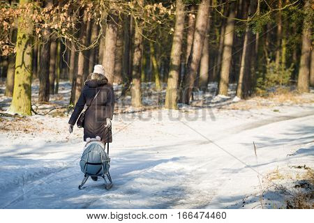 Mother strolling in forest at winter time and pull on sled her young daughter.