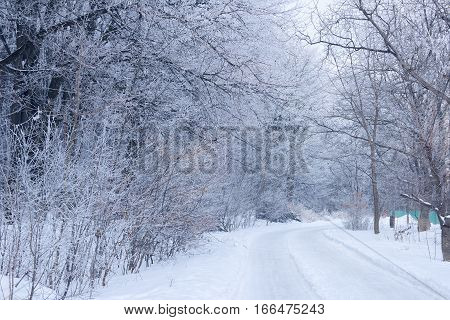 winter forest covered with hoarfrost with the footpath