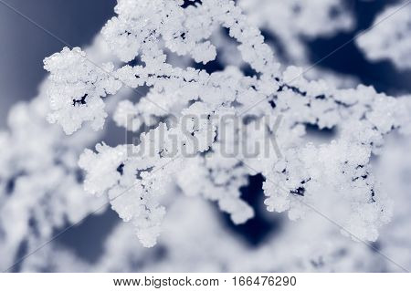 plant covered with white ice on a blue background