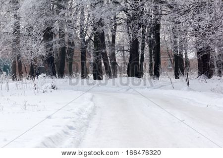 winter forest with a footpath and two houses