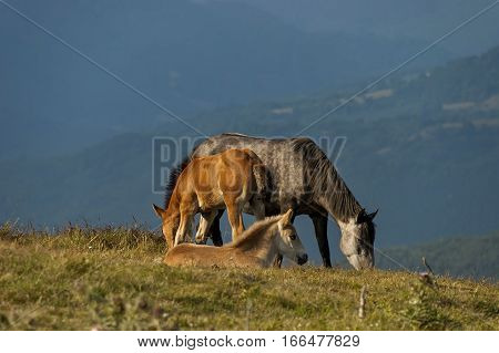 Mountain landscape and wild horses in Central Balkan, Stara planina, Beklemeto or Trojan pass, Bulgaria