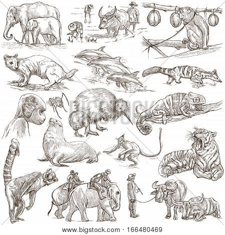 Animals around the World. An hand drawn full sized illustrations. Collection of line art pictures. Drawing on white background.