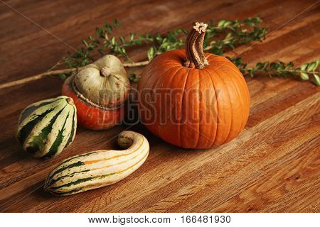 Mixed different pumpkins isolated on wooden table in center next to green branch of eucalyptus tree
