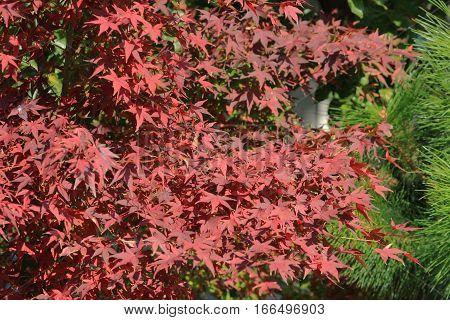 a fall season at Kyoto temple 2014