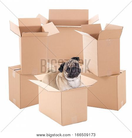 Cute Pug Dog Sitting In Brown Carton Box Isolated On White
