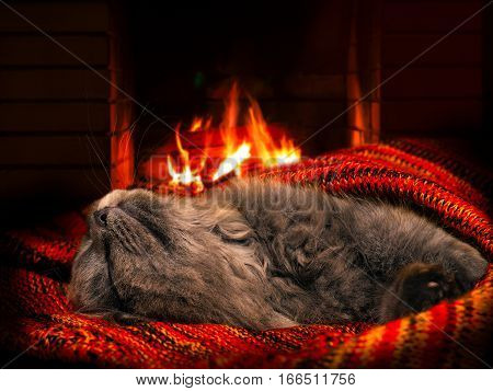 The cat sleeps by the fireplace. Bliss - a bright fire warm and cozy