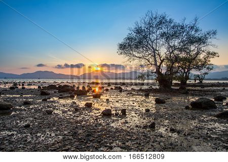 Old mangrove tree with a colorful sunset during low tide at Mor Mu Dong area in Phuket Thailand