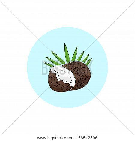 Coconut, Round Icon Colorful Coco, Fruit Icon