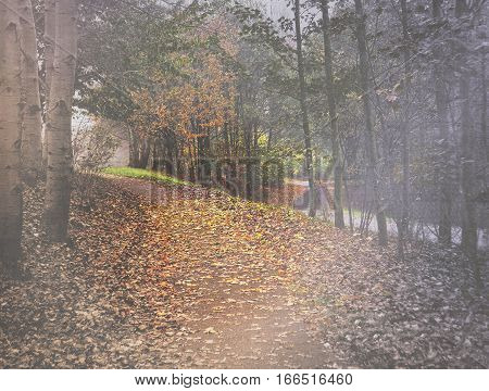 misty sunbeams on woodland footpath with autumn leaves