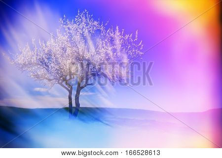 blurred background landscape with a blossoming apricot tree