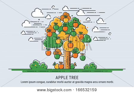 Apple tree. Season collecting apples. Thin lines vector illustration.