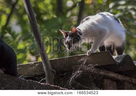 Cat ready to pounce on a roof