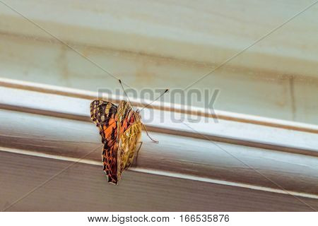 Butterfly on the window frame wants to freedom. Painted Lady Butterfly. Limited depth of field.