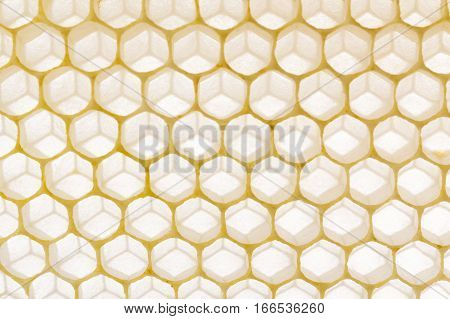 Natural honeycomb backlight to enhance the structure of the hexagon beeswax cells of honey bees showing housel positioning.