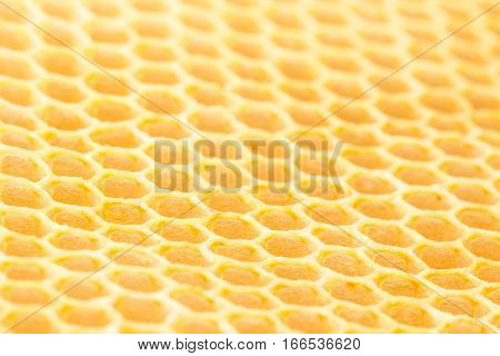 New unused naturally produced beeswax honeycomb from a low angle with selective focus.