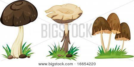 illustration of mushroom on a white background